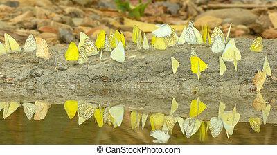 Butterflies flying around the salt marsh. - Butterflies...