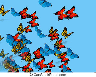 butterflies flying