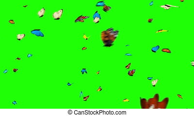 Butterflies Flying on a Green Background. 3d animation,
