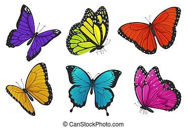 butterflies., illustration., セット, カラフルである, ベクトル