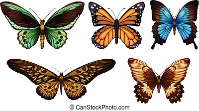 Butterflies - Illustration showing the species of...