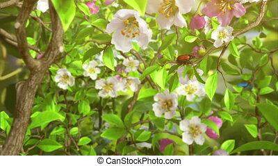 Butterflies in the bush