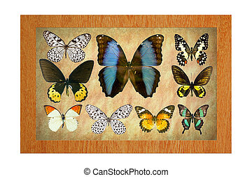 Butterflies in the frame - A butterfly is a mainly...