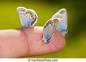 butterflies on a finger