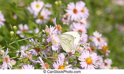Butterflies on flowers