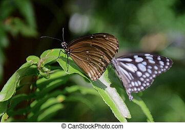 Butterflies on green leaf in the garden