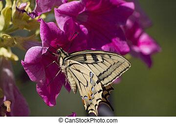 butterflies on the flower