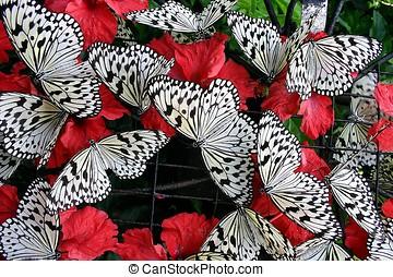 Butterflies - Dotted butterflies.