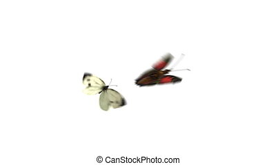 Butterflies Playfully Fly on a Green Background. Two...