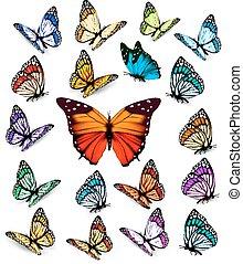 butterflies., różny, komplet, vector., barwny