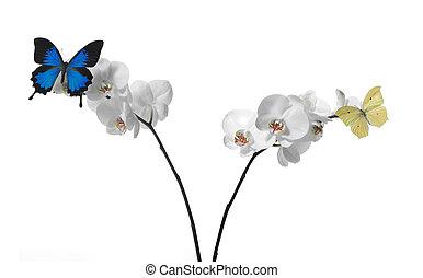 butterflies rcutlery on o