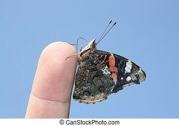 Butterflies Red Admiral Vanessa