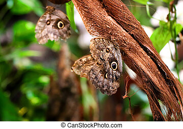 Butterflies resting on a branch in green vegetation.