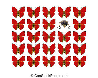 Butterflies showing concept of difference, individuality, ...