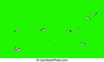 butterflies small swarm - green screen