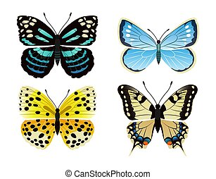 Butterflies Types Set of Icons Vector Illustration