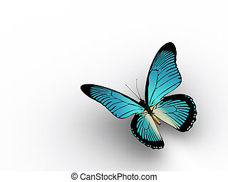 Butterfly 3 - A butterfly on white background - rendered in...