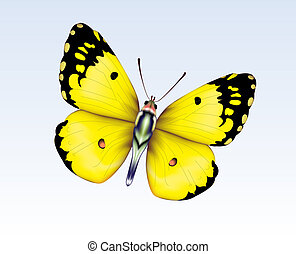 Butterfly 4 - Digital illustration. Gradient mesh. Gradients...