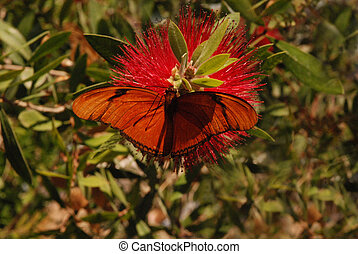 Butterfly and Bottle Brush