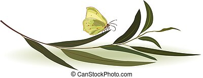 butterfly and eucalyptus - vector divider with butterfly and...