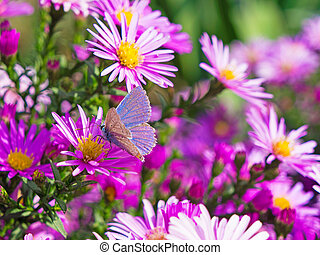 butterfly and flowers 3