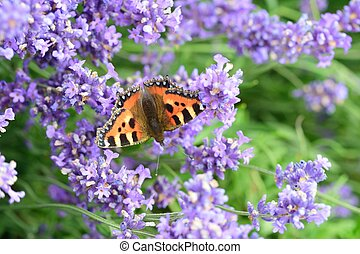 Butterfly and lavendar background