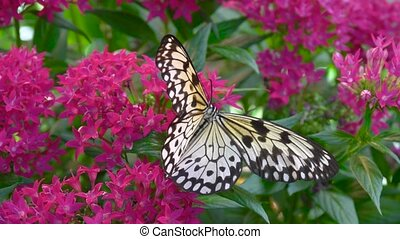 Butterfly and Tropical Flower, Macro Closeup. Black and...