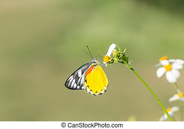 butterfly and white daisies