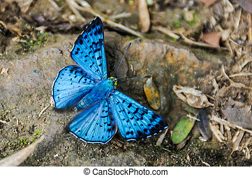 Butterfly at Iguazu Falls, Argentina
