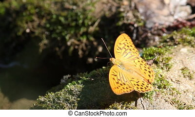butterfly beautiful nature scene