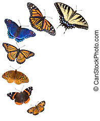 Seven different kinds of butterflies are arranged on a white background to make a border. From bottom to top are northern crescent, painted lady, fritillary, viceroy, red-spotted purple, monarch, and tiger swallowtail butterflies.