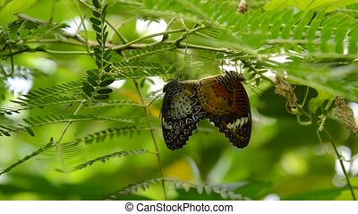 butterfly breeding under branch in garden