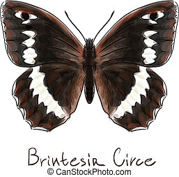 Butterfly Brintesia Circe. Watercolor imitation. Vector...