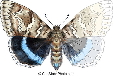 Butterfly Catocala Fraxini. Unfinished Watercolor drawing imitation. Vector illustration.