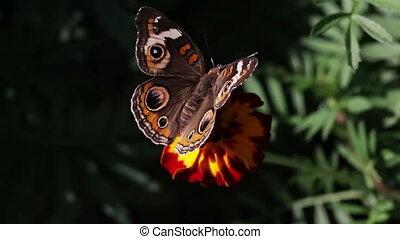 Butterfly closeup.