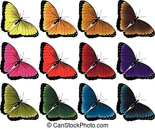 Butterfly color vector