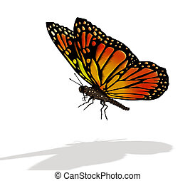 Butterfly - Colourful butterfly