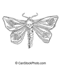 Butterfly dead head sketch from the contour black brush lines different thickness on white background. Vector illustration.