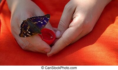 Butterfly drinks water from female hands, thirsty butterfly,...