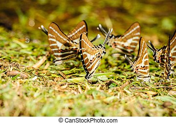 Butterfly eating salt marsh. - Beautiful butterfly eating...