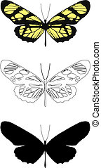 butterfly - illustration butterfly in vector.