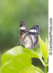 butterfly feeding in sunny summer garden