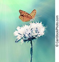 butterfly feeding on flowers in a Summer garden.