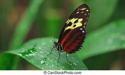 butterfly feeding on flowers in a Summer garden