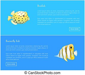Butterfly Fish and Boxfish Set Vector Illustration -...