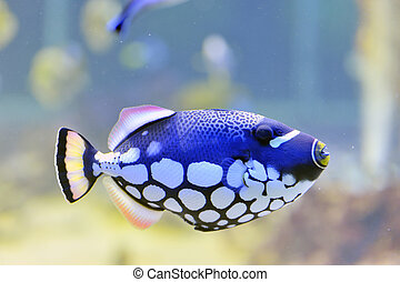 butterfly-fish, aquarium, bunte