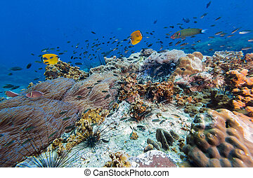 Butterfly fish in the coral reef