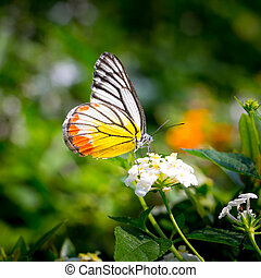 butterfly fly in morning nature.