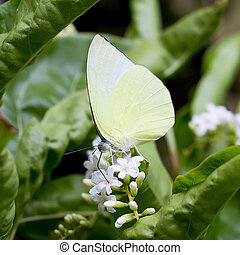 butterfly fly
