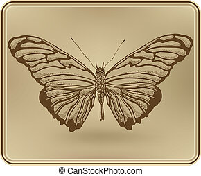 Butterfly framed, hand-drawing. Vector illustration.